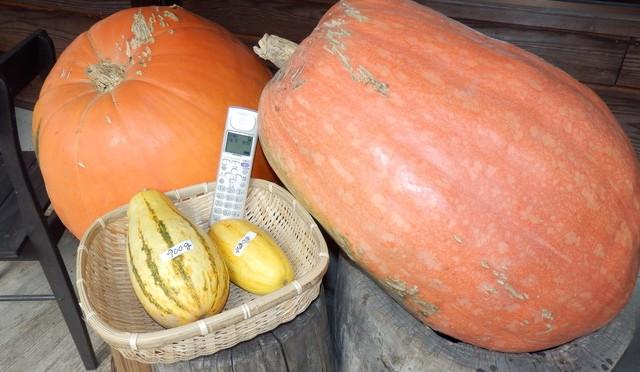 大かぼちゃ、2個で何キロでしょう?