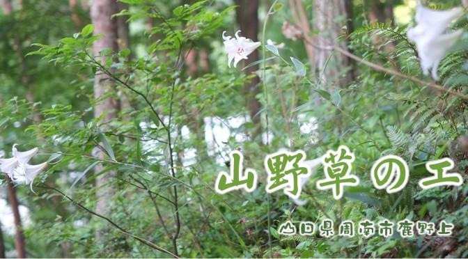「山野草のエキ」保護活動が・・おしるこパーティに・・・(2月18日)