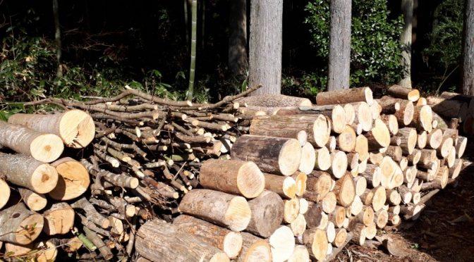 薪を切っています。