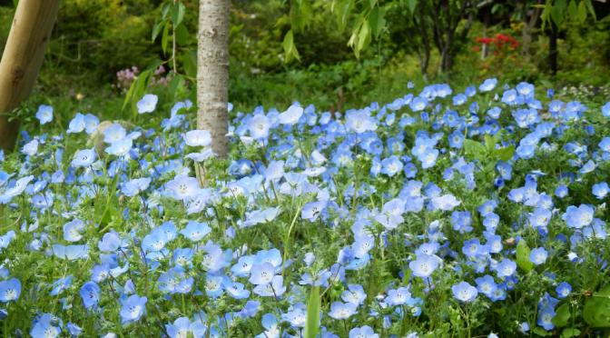 たぬきの庭の花情報