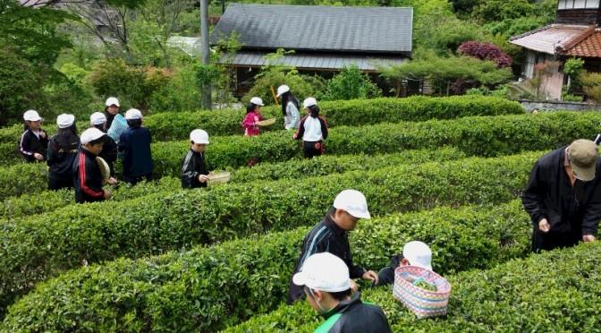 釜炒り「鹿野茶」の製造過程をユーチューブにアップしました。