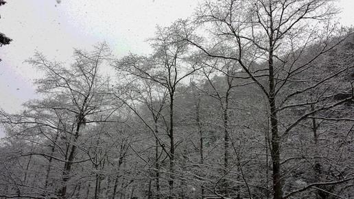おじさんは雪景色が好き