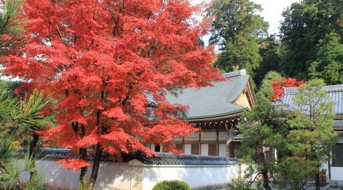 鹿野の紅葉