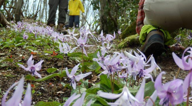 弟見山、カタクリの花見学登山の案内