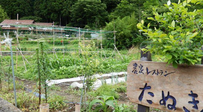 畑の夏野菜